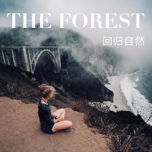 雾海森林写真